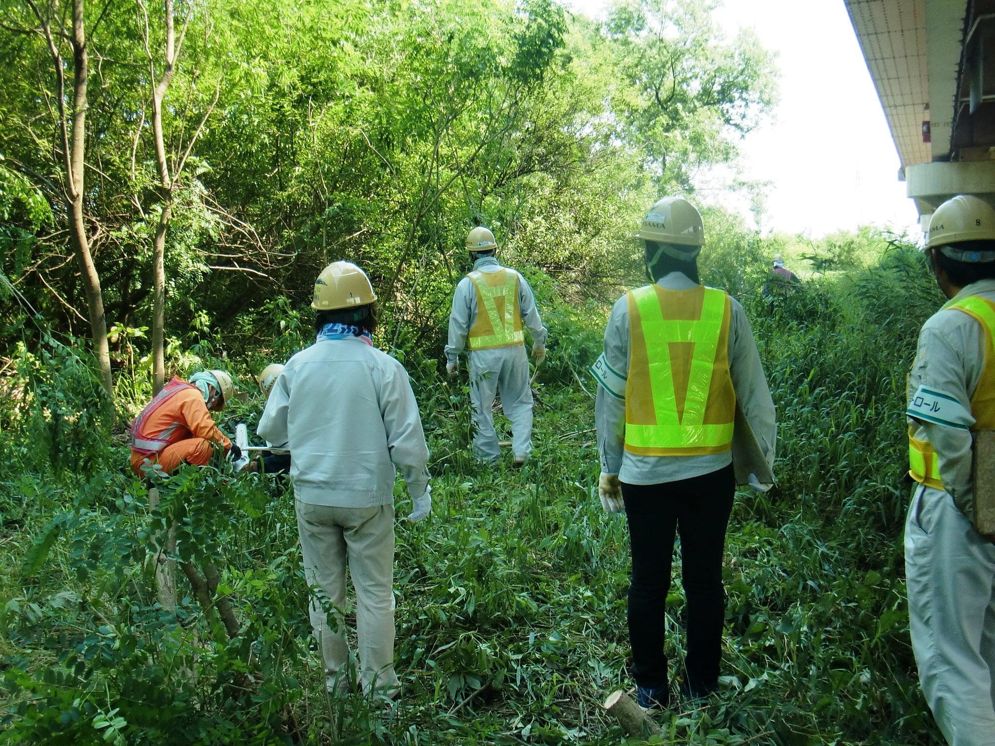 維持樹木伐採 作業状況
