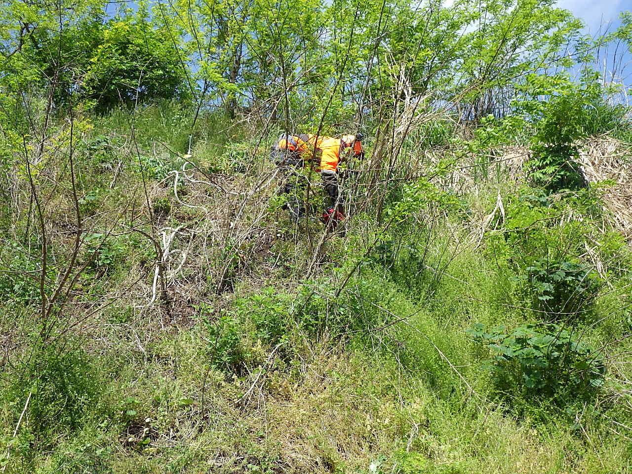 維持前沢支障木伐採3 作業状況確認